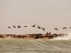 dsd_6399-ridotta-namibia-costa-deserto-del-namib