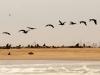 dsd_6464-ridotta-namibia-costa-deserto-del-namib