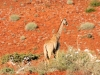 dsd_5756-ridotta-namibia-damaraland