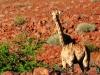 dsd_5764-ridotta-namibia-damaraland