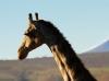 dsd_5769-ridotta-namibia-damaraland