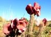 dsd_5796-ridotta-namibia-damaraland