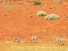 dsd_5815-ridotta-namibia-damaraland