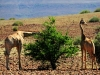 dsd_5830-ridotta-namibia-damaraland