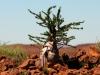 dsd_5854-ridotta-namibia-damaraland