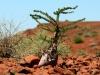 dsd_5855-ridotta-namibia-damaraland