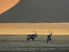 dsd_6778-ridotta-namibia-deserto-del-namib
