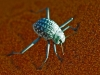 dsd_6801-ridotta-namibia-deserto-del-namib