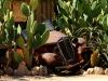 dsd_6991-ridotta-namibia-deserto-del-namib