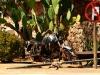 dsd_6995-ridotta-namibia-deserto-del-namib