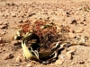 dsd_6008-ridotta-namibia-skeleton-coast