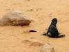 dsd_6042-ridotta-namibia-skeleton-coast