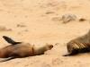 dsd_6043-ridotta-namibia-skeleton-coast