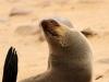 dsd_6047-ridotta-namibia-skeleton-coast