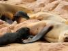 dsd_6055-ridotta-namibia-skeleton-coast