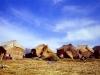 PICT0048 el crop  ridotta - 1997 Perù