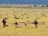 DSD_8718 con crop  ridotta - 2015 S.S.Africa